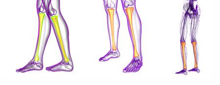 74512985 - 3d rendering medical illustration of the tibia bone